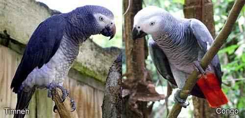 چگونه به طوطی سخن گفتن و حرف زدن بیاموزیم